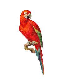 Buy Home Parrots